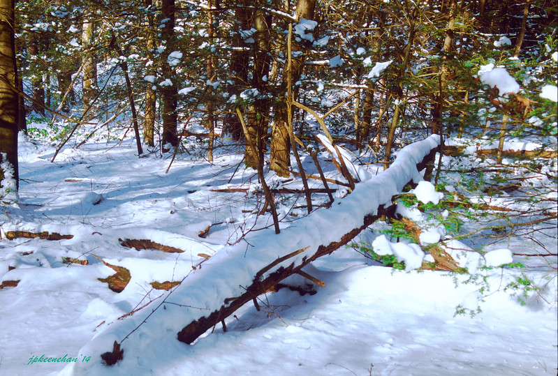 Snowy Woods in St. Anthony's Wilderness North of Harrisburg Pennsylvania