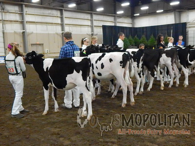 Mid-East Spring Natl Holstein Heifer Show 16
