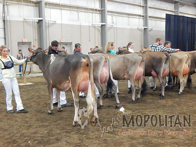 OH Spring Jersey Show 16-Cows
