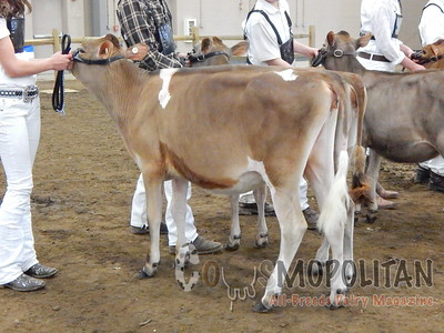 OH Spring Jersey Show 2016-Heifers