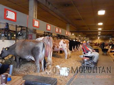 Ohio Spring Show Barn Candids 2016