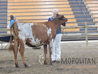 Ohio Spring Show Supreme Champion