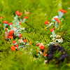 "These red lichen in the moss are called ""British Soldiers""."