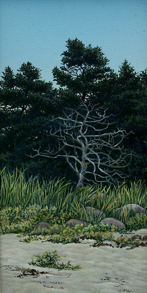 Torbay Beach Spruce<br /> 8.25 X 4.5<br /> oil on board<br /> <br /> ON DISPLAY AT GALLERY 78