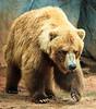 Zoo 4-24-2010 (52 of 78)