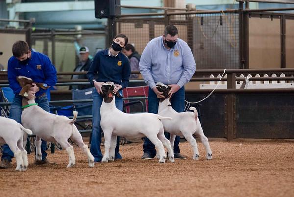 market_goats_20210317_0004