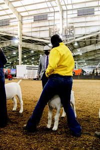market_goats_20210317_0022