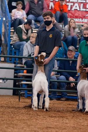 market_goats_20210317_0007