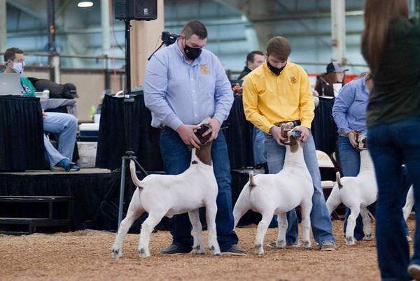 market_goats_20210317_0023