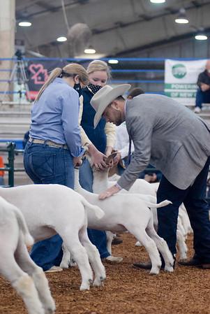 market_goats_20210317_0006