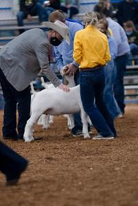 market_goats_20210317_0016