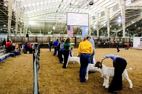market_goats_20210317_0020