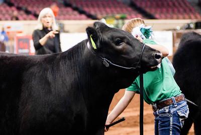 steers_20210317_0006