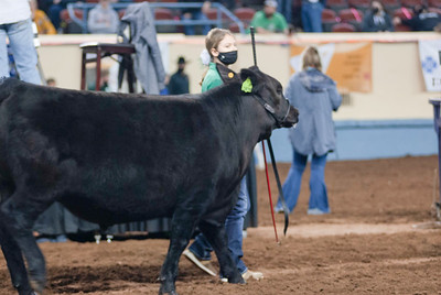 steers_20210317_0004