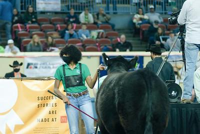 steers_20210317_0017