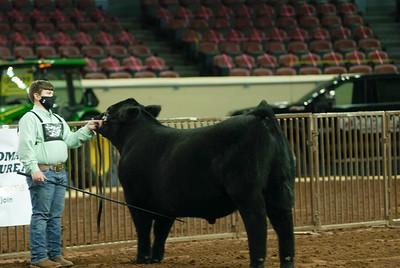steers_20210317_0022