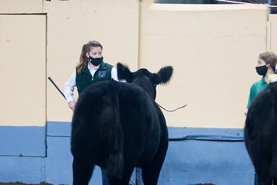 steers_20210317_0012