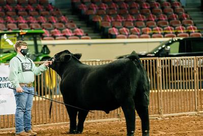 steers_20210317_0021