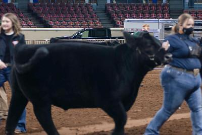 steers_20210317_0003