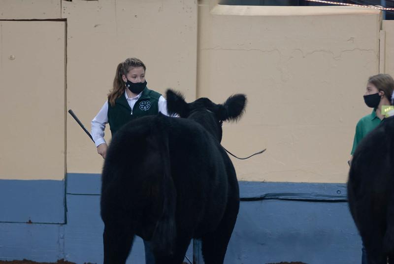 steers_20210317_0013