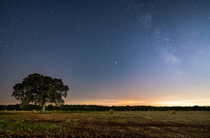Arcadia Tree ~ Arcadia, Oklahoma