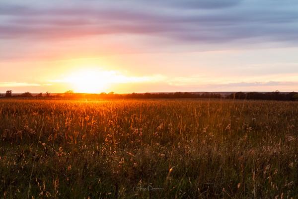 Tallgrass Prairie Preserve ~ Pawhuska, Oklahoma
