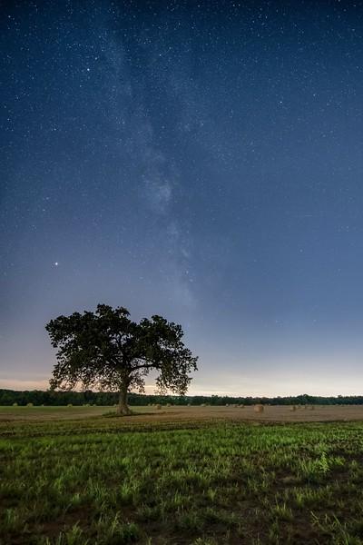 Arcadia Tree & Summer Night Sky