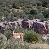 July 2017 - Antelope No. 2