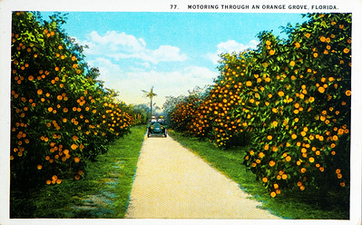 Motoring through Orange Grove