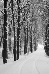 Snowy Road, Hungary