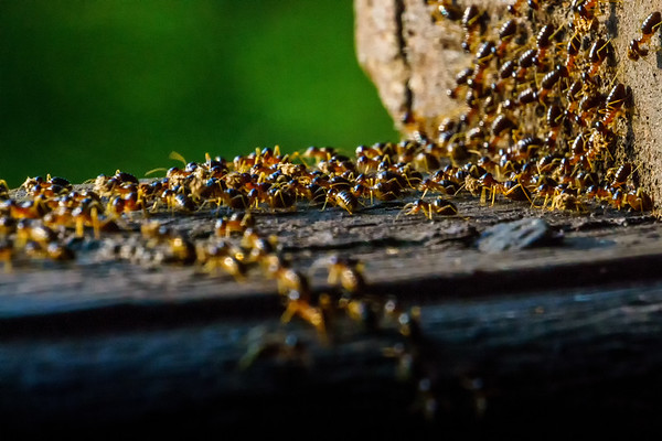 Ants, Luang Prabang Jungle