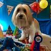 OLIVER THE DOG 3RD BIRTHDAY