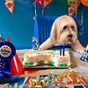 Oliver's third Birthday Party