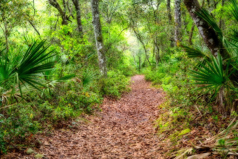 River Trail, O'leno state Park, FL