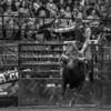 Bull Bash