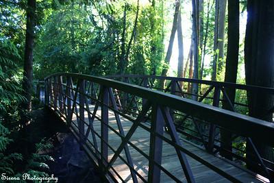 Denny Bridge