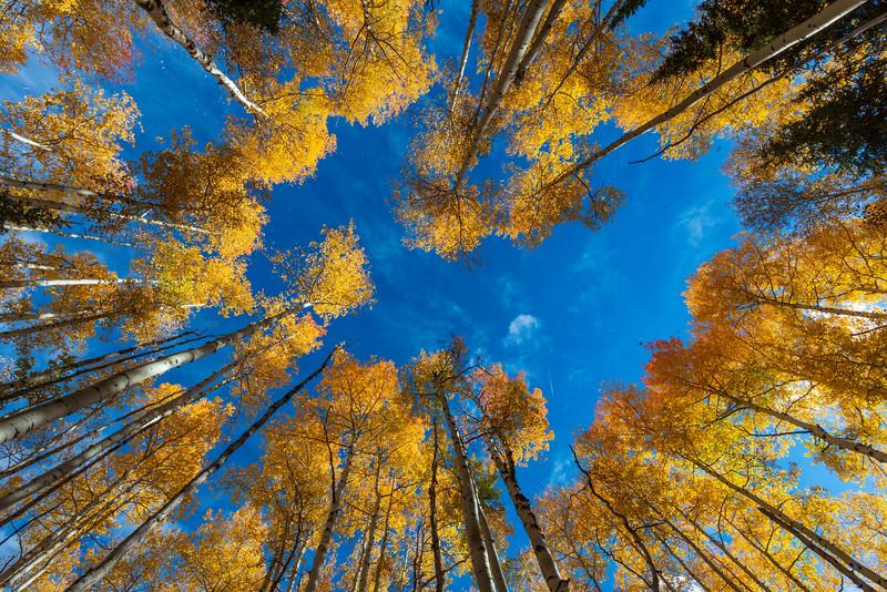 Aspen Tree Circle