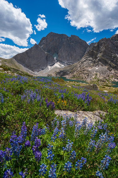 Wildflowers and Temple Mountain