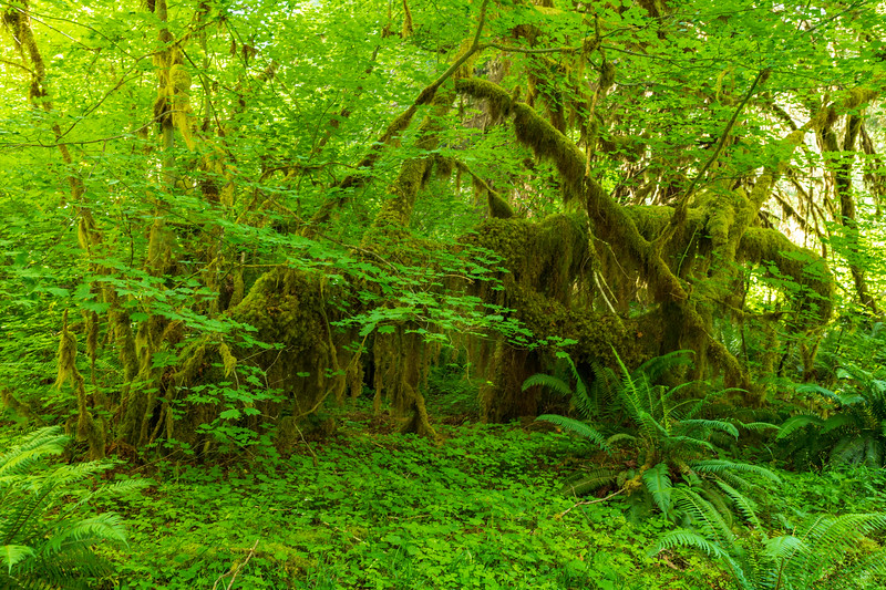 Draped in Moss
