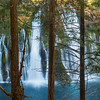 Burney Falls through the Trees