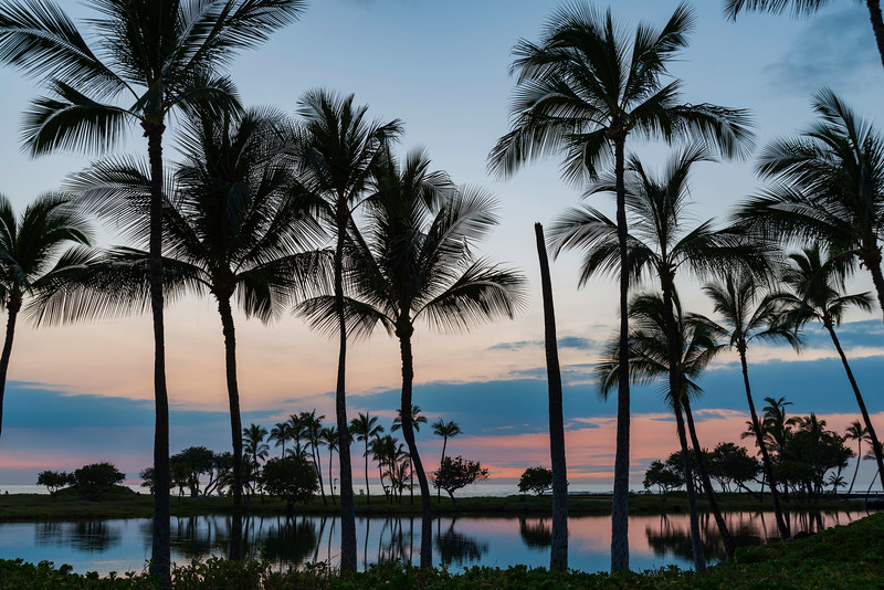 Estate Palm