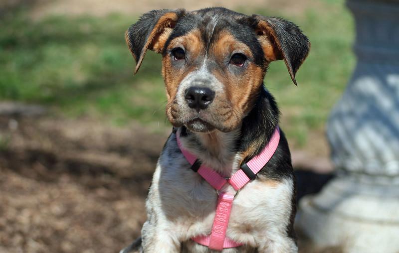 michelle puppy 1