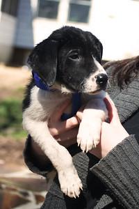 michelle puppy 4