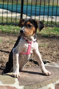 michelle puppy 2
