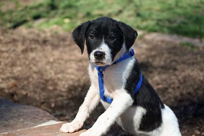 michelle puppy 3