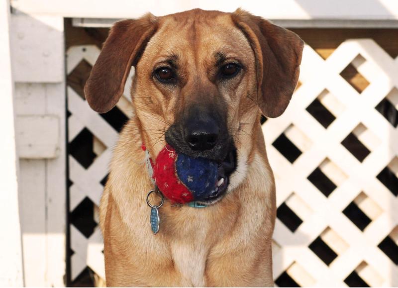 photo dog 3