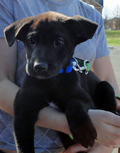 becky puppy