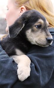hound 2