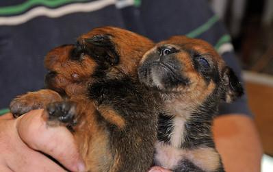 clover puppies 1