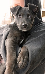 jess puppy 1